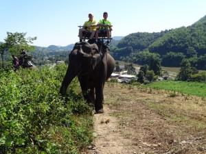 Onderweg op de olifant