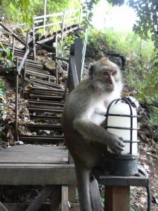 De apen houden de wacht
