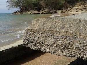 Fossiele schelpen lijken betonplaten