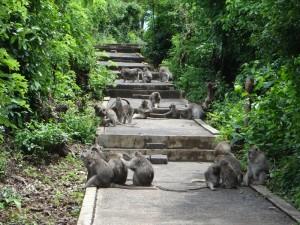 De apen zijn volop aanwezig in de Uluwatu tempel