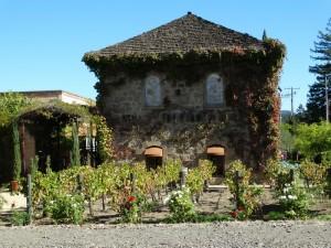 Mini wijngaard voor de deur
