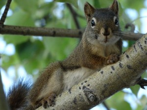 De Squirrel kijkt toe