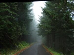 Bear Camp Coastal Road