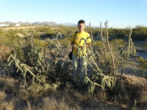 Desert Christmas Tree Cactus
