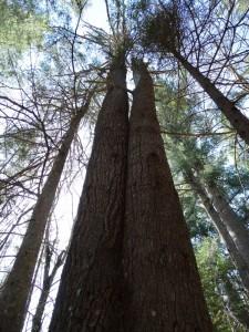 """Meters hoge """"mastbomen"""""""