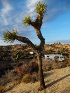 De camper in Joshua Tree National Park