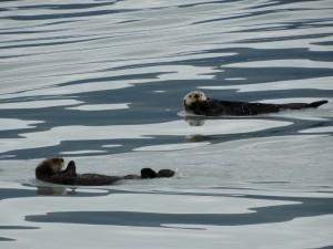 De Sea Ottersin de baai