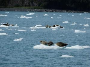 Lekker uitrusten op de ijsschotsen