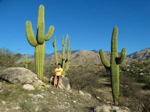 Saguaro's in Cataline State Park