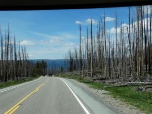 Bosbrand restanten volop in Yellowstone