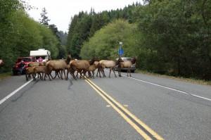 De Roosevelt Elks steken over