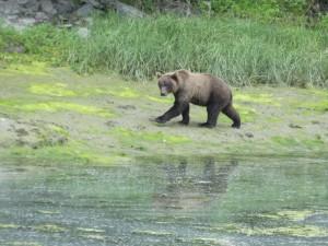 De Grizzly langs de weg