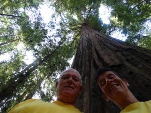 """Eindeloos hoge bomen aan de """"Avenue of the Giants"""""""