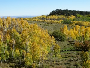 Kleurige Aspen langs de route