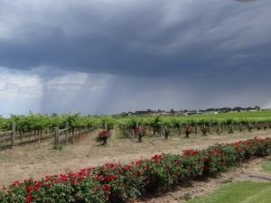 Dreigende wolken over de wijnvelden